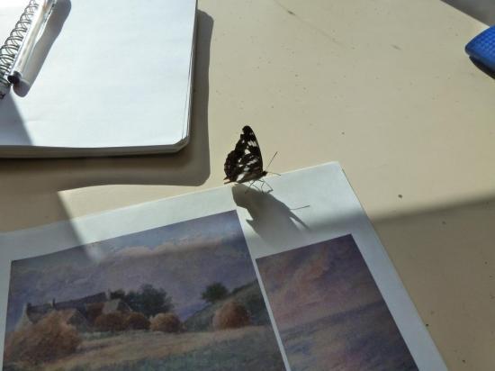 Un papillon curieux de peinture...