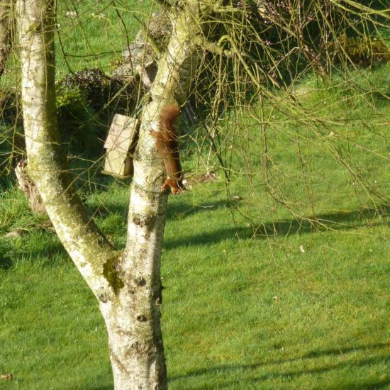 L'écureuil -041.jpg